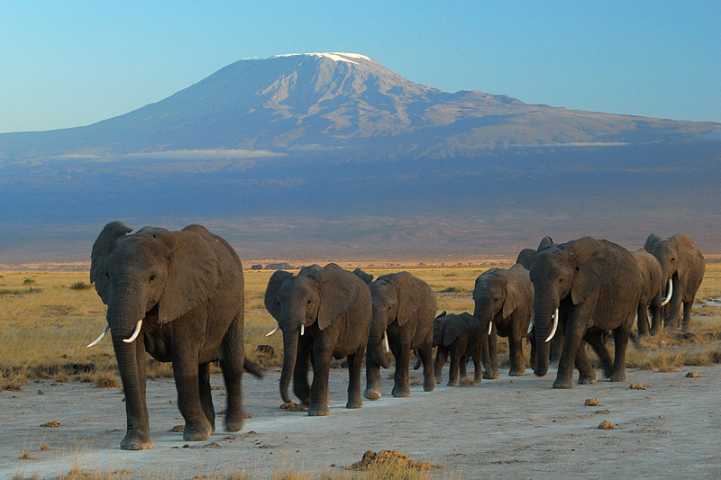 Kilimanjaro se afla la granita dintre Kenya si Tanzania, fiind cel mai inalt munte din Africa