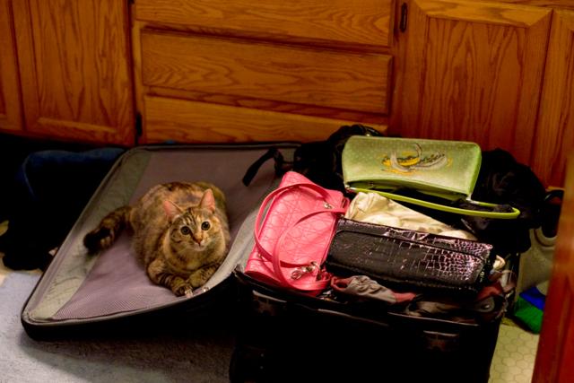 Packing Pro este o aplicatie ce te ajuta sa nu iti uiti nimic din bagajele cu care calatoresti