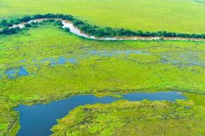 Pantanal se numeste una dintre minunile naturii aflate in Brazilia si este, de fapt, o mlastina localizata in inima Americii de Sud.