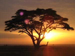 O vizita la Parcul National Serengeti nu ar trebui sa lipseasca in nici un caz de pe lista locurilor de vizitat in Tanzania.