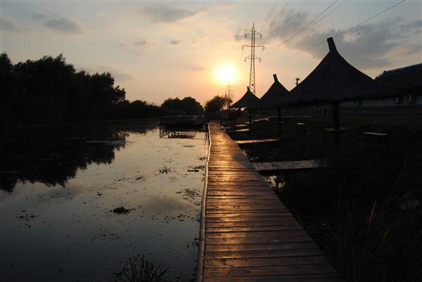 Apus in Delta Dunarii