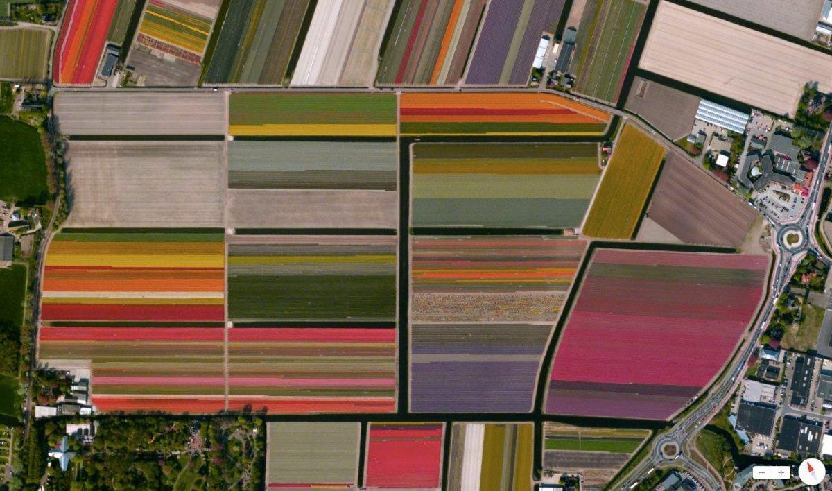 Campuri de lalele din Olanda vazute din satelit