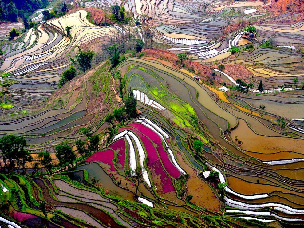 Campuri de orez China vazute din satelit