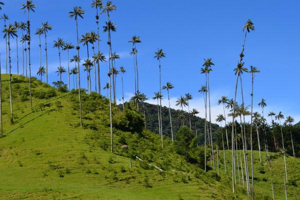 Columbia - Valea Cocora