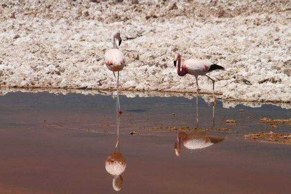 Chile - Desertul Atacama