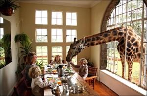 Giraffe Manor este un hotel micut, situate langa capitala Kenyei, Nairobi.