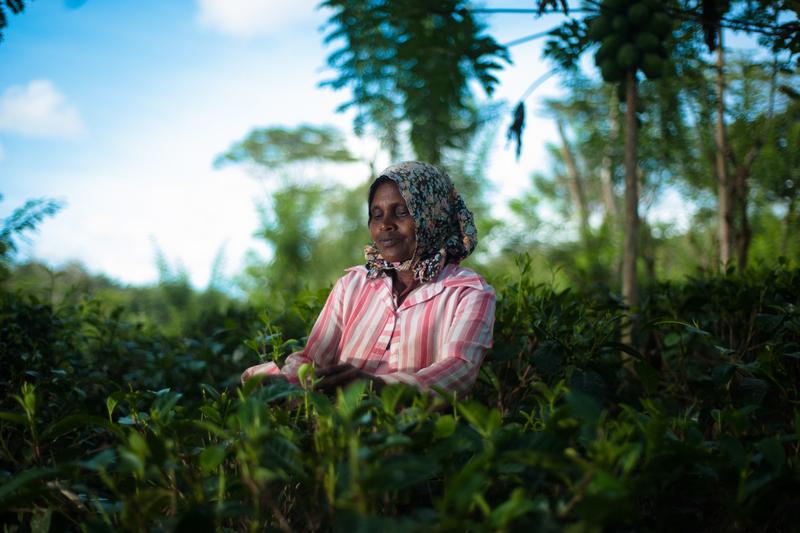 Localnica muncind pe plantatiile de ceai din Sri Lanka