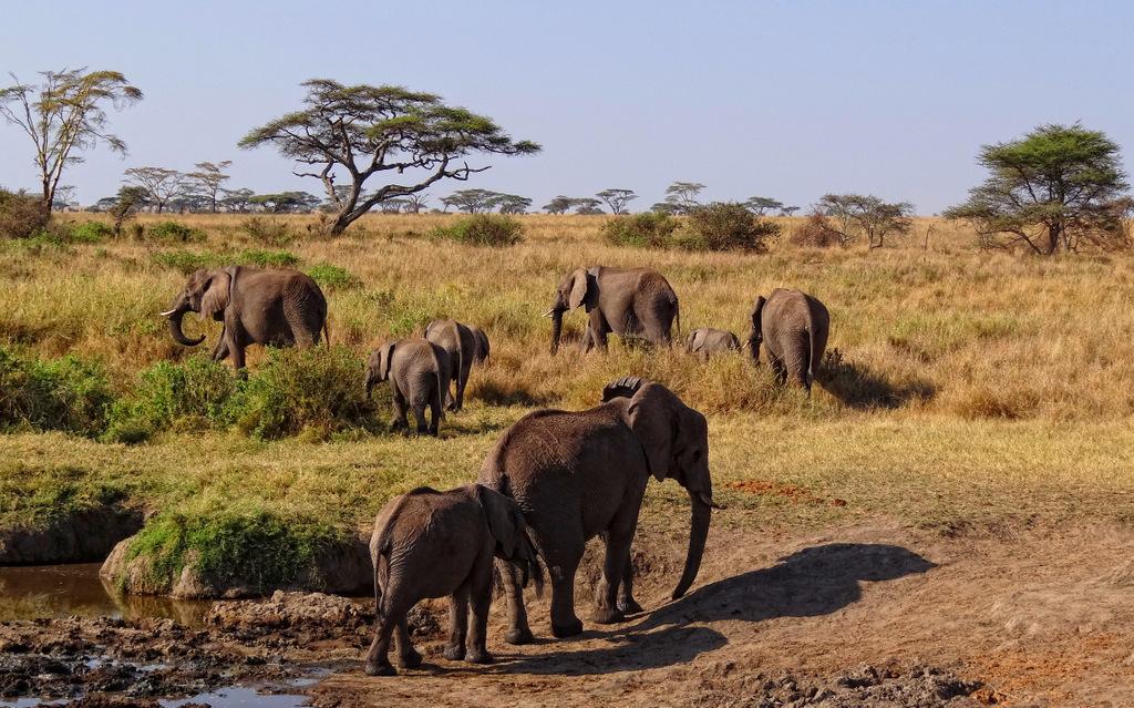 Avand de trei ori marimea Frantei, Tanzania este destinatia cea mai potrivita pentru cuplurile care isi doresc o luna de miere in spirit african.