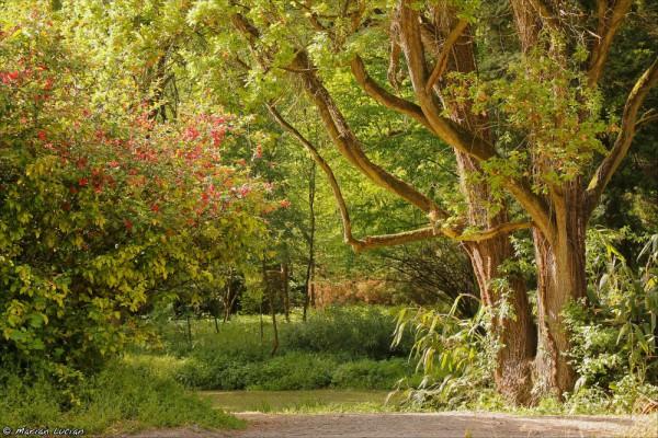 Peisaj_in_Arboretum_Simeria