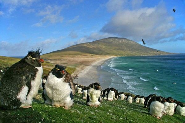 croaziera in Insulele Falkland la Pinguini Rockhopper