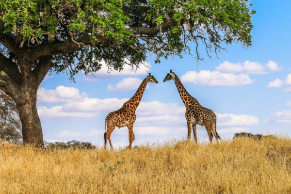 sejur in Parcul National Tarangire- Zamzibar