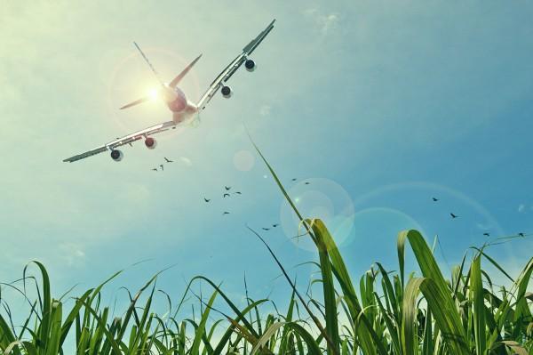 Zboruri cu avionul