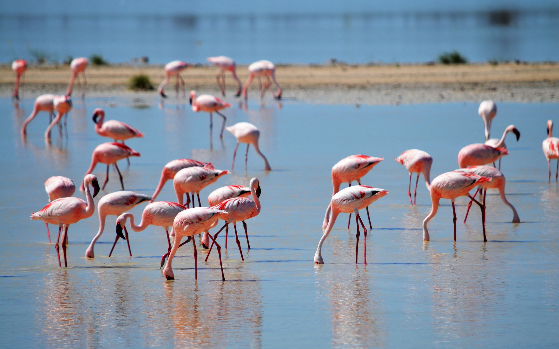 calatorie-tanzania-safari-flamingo