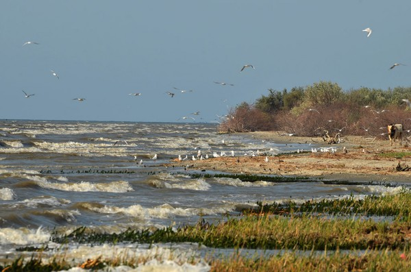 Delta Dunarii pentru incepatori