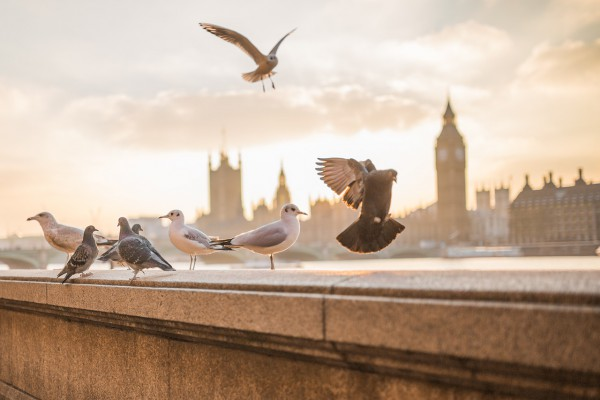 city break la Londra cu plecare din Bucuresti