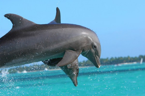dolphin-855574_640