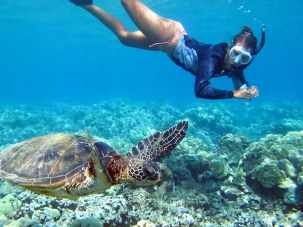 Inot cu broastele testoase gigantice Seychelles