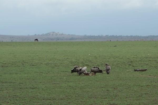 tanzania 2013 586