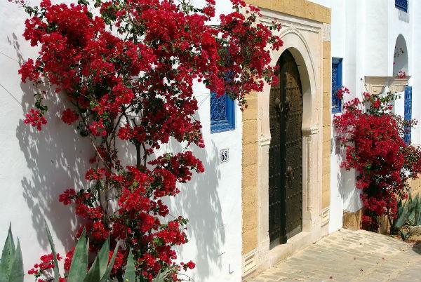 tunisia-1463720_1920