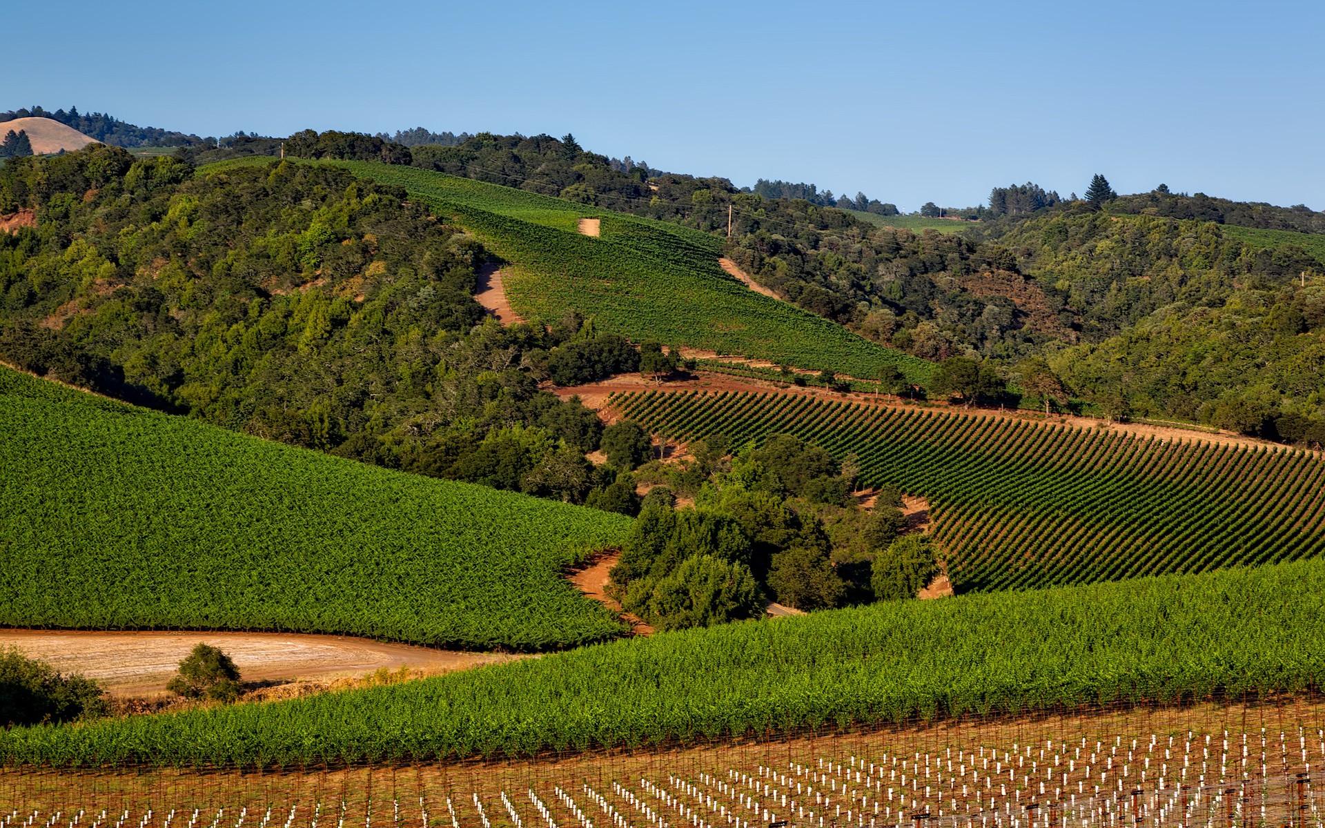 vineyard-1597724_1920